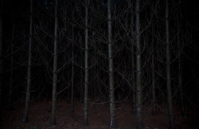 dark forest-4